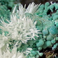 aragonite, malachite, valcroze, alzon, gard FLG 3,45mm.jpg